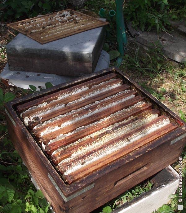 La rehausse est surchargée. Les abeilles ont construit et rempli des rayons dans un maximum de volume !