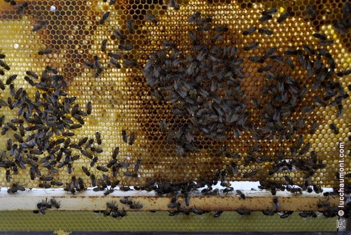 agrandissement de la ruche happy culture et autres sujets enfin peut tre. Black Bedroom Furniture Sets. Home Design Ideas