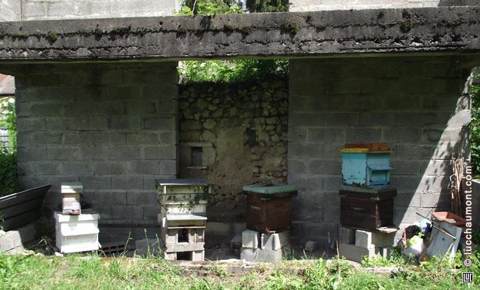 Groupe nouvelles colonies abeilles