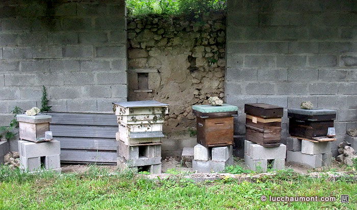 Mon rucher au 19 juin